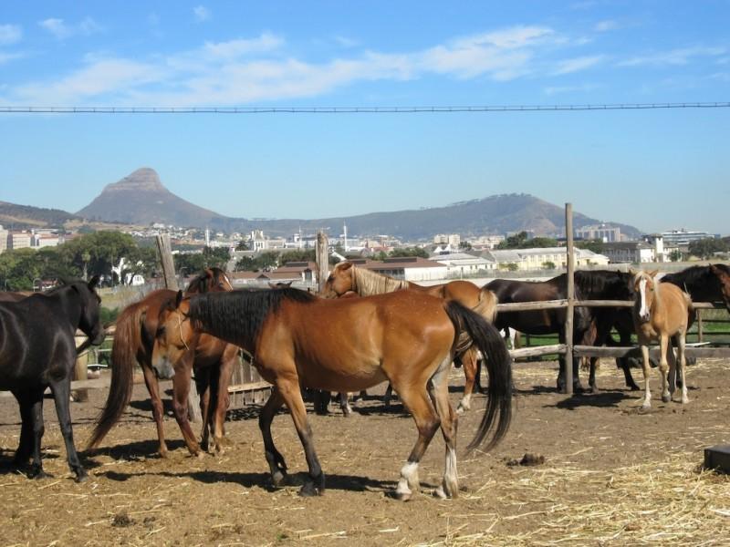horse_riding_743